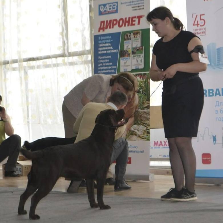 http://farvistgold.narod.ru/11/bob/puppy/bonna2.jpg