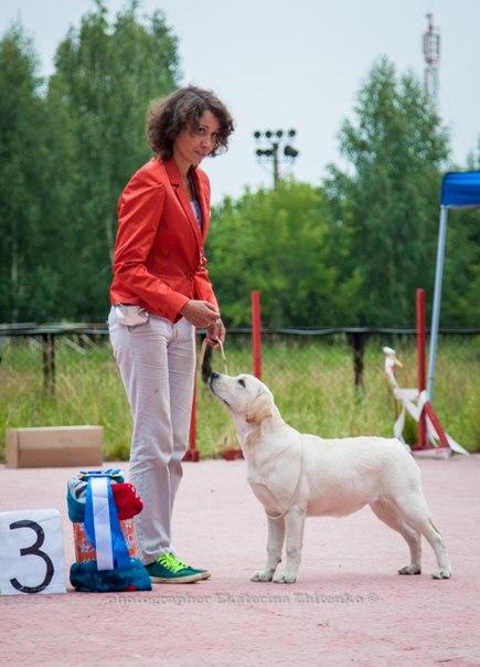 http://farvistgold.narod.ru/11/bob/puppy/malina.jpg