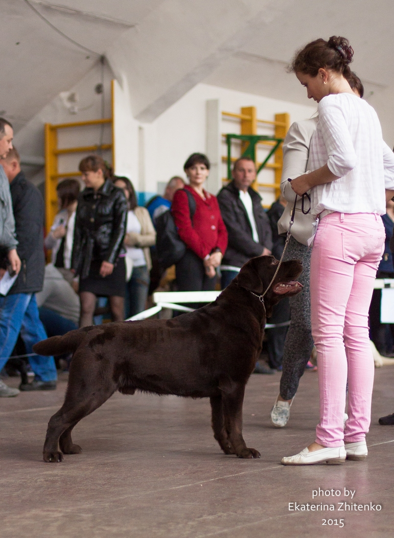 http://farvistgold.narod.ru/11/oliviya/puppi/maj3.jpg