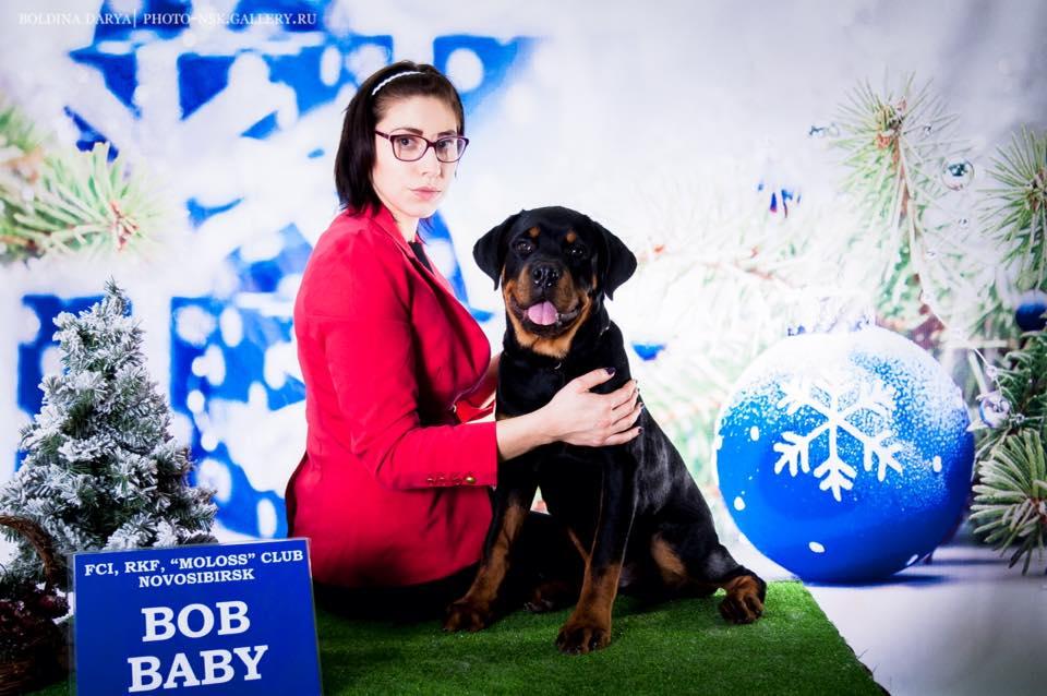 http://farvistgold.narod.ru/ENG/nashifito/varshava/puppy/arlos/arkon.jpg